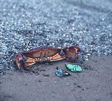 A Shore Crab  by BravuraMedia