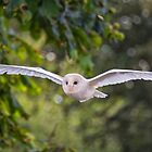 Barn Owl by M.S. Photography & Art