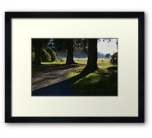 Serenity of old trees Framed Print