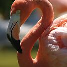 Flamingo, Playa del Carmen by Barry Doherty