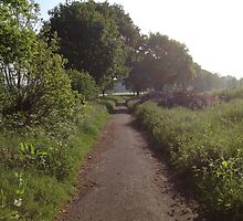 Sunshine On Footpath In The Countryside by ScenicScenes