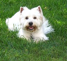 Westie World by MarianBendeth