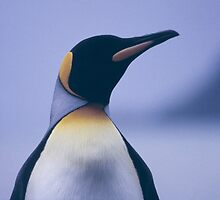 King Penguin by BravuraMedia