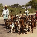 Herding goats - South India by indiafrank