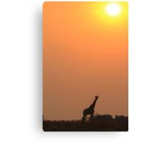 Giraffe Solitude of Gold - African Wildlife Canvas Print