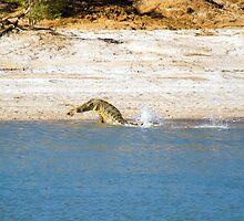 Saltwater Crocodile Eating 4/6 by Romandar