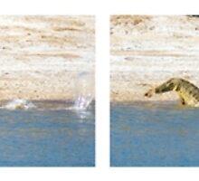 Saltwater Crocodile eating a Kangaroo by Romandar