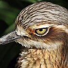 Bush Stone-Curlew by Cindy Hitch
