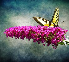 Eastern Yellow Swallowtail by SRowe Art