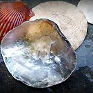 SEA SHELLS COLLECTION by Elaine Bawden