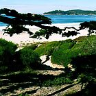 #225  Carmel Beach In Color by MyInnereyeMike
