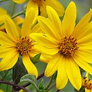 Double Your Sunshine by lorilee