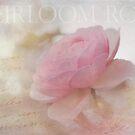Heirloom Pink Rose by Lynn Starner