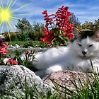 ๑۩۞۩๑ Babe Purring In My Garden๑۩۞۩๑ by ✿✿ Bonita ✿✿ ђєℓℓσ