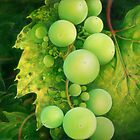 """The Grapes"" by Anna Miarczynska"