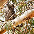 Spotted Eagle Owl by SeeOneSoul