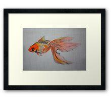 Goldfish Pond ( close up #9) Framed Print