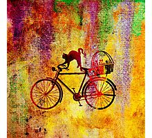 Cat and Bicycle Photographic Print