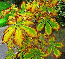 Autumn leaves already by Sandra Caven