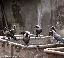 Crows Of Mumbai by Leslie  Hagen