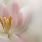 Macro Impressions by AnnieSnel