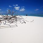 Driftwood & Castaways - Cocos (Keeling) Islands by Karen Willshaw