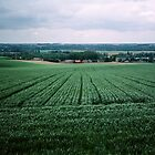 Crops in Somme valley France 198405080062  by Fred Mitchell