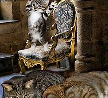 ♚ ♚ ♚(◕‿◕✿)♚ Oh I Just Can't Wait To Be King ♚ ♚ ♚(◕‿◕✿)♚ by ✿✿ Bonita ✿✿ ђєℓℓσ