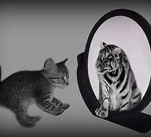 ㋡ MIRROR OF TRUTH WHAT DO I SEE? I SEE THE REAL TIGER IN ME ㋡ PICTURE/CARD by ╰⊰✿ℒᵒᶹᵉ Bonita✿⊱╮ Lalonde✿⊱╮