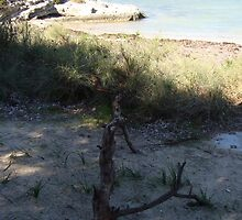 Beach scene, Rottnest Island by visualimagery