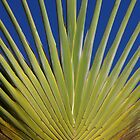 Palm Sunday by David McMahon