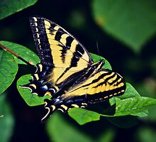Yellow Swallowtail by LightofLuna