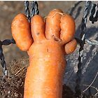 It came from the Garden - Carrot Foot by Barry Doherty