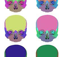 Skully Net by rai93betto
