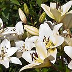 White Lilies by Sandra Foster