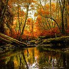 Overflow ~ Fall Colors ~ by Charles & Patricia   Harkins ~ Picture Oregon