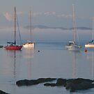 Morning Mist, Quarantine Bay, Eden, NSW by johnrf