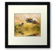 Grey Crowned Cranes. Framed Print