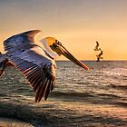 Pelican Sunset by Tarrby