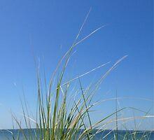beach grass by hankierat
