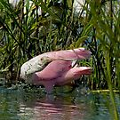 Spoonbill and Fish by imagetj