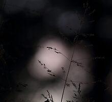 Sleeping time by Remo Savisaar