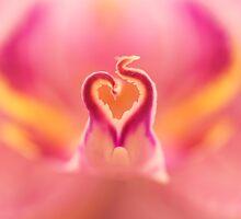 Pink Ribbon by Lindie