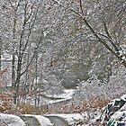 11/10/13 First Snow 2 by Carolyn Clark