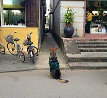 Side Street Dog by karlmagee