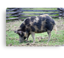 ... and Bacon Canvas Print