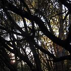 Black Branches by Chris Gudger