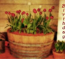 Potted Tulips by bellecards