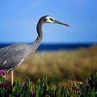 Newcastle Bird by Daniel Rankmore