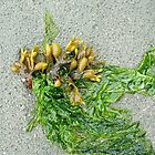 Seaweed by AnnDixon